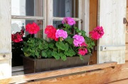flower-box-466049_640