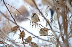 sparrow-292637_640