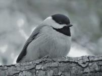 bird-3089031_640