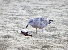 bottle + gull