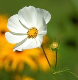 flower. haiku